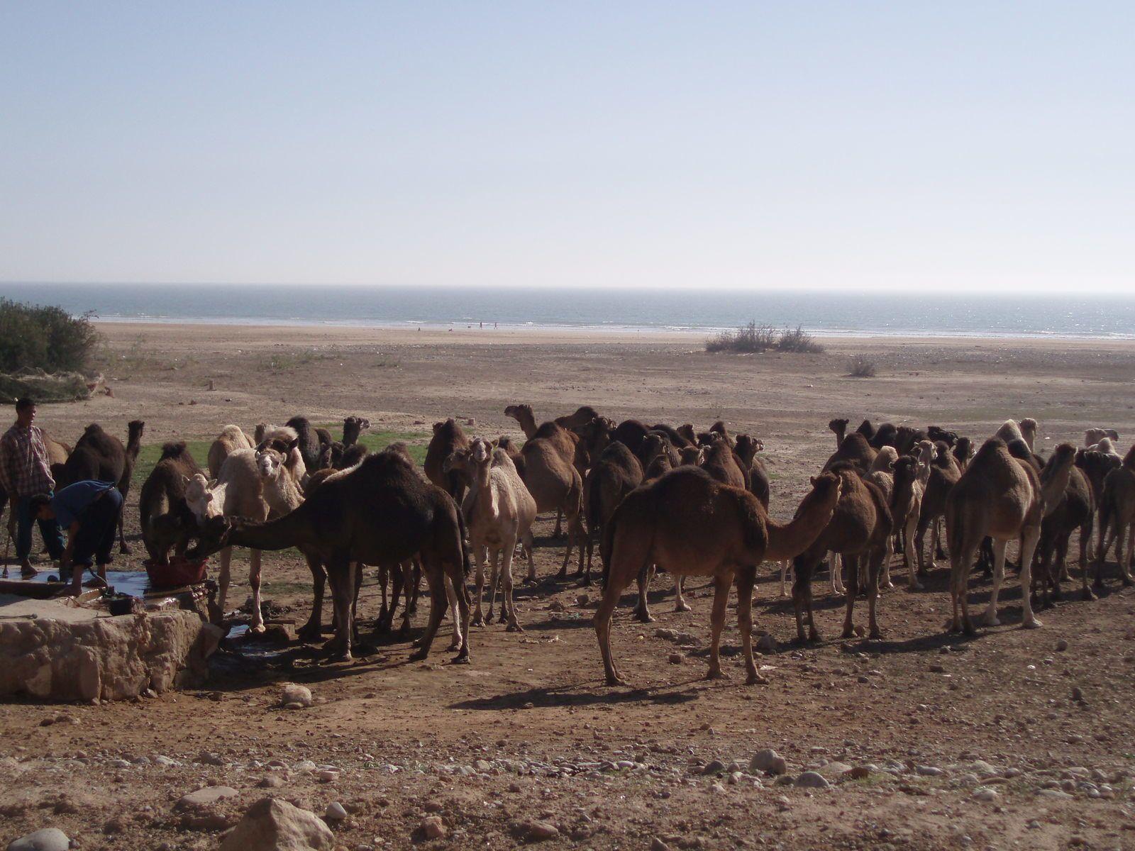 2007 Agadir (Maroc) et ses environs en février