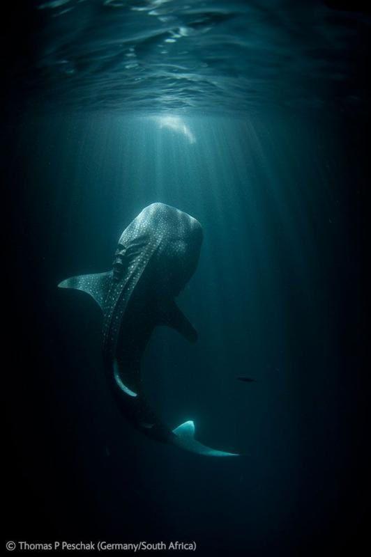 Les gagnants du concours Wildlife Photographer 2012