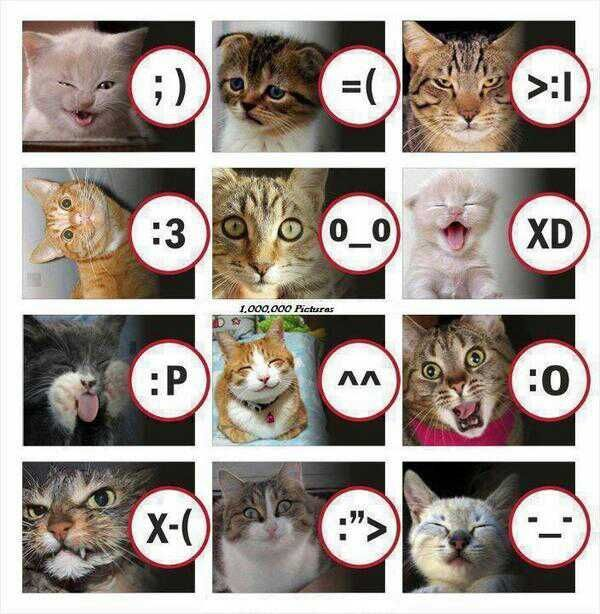 Cat Smiley