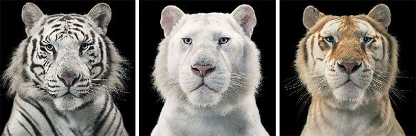 More than Human Tim Flach Photograph