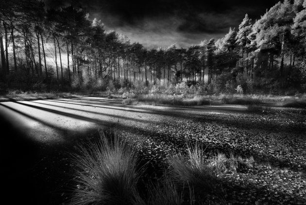 Delamere Forest, Cheshire - David Byrne