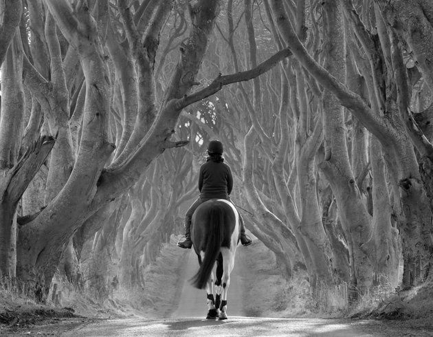 """Riding Out, the Dark Hedges"", County Antrim, Irlande du Nord - Bob McCallion"