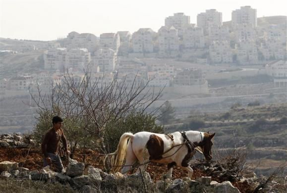 A Palestinian farmer ploughs his land as West Bank Jewish yichouv of Efrat, in the Etzion yichouv bloc near Bethlehem, is seen in the background December 22, 2011.  REUTERS/Baz Ratner