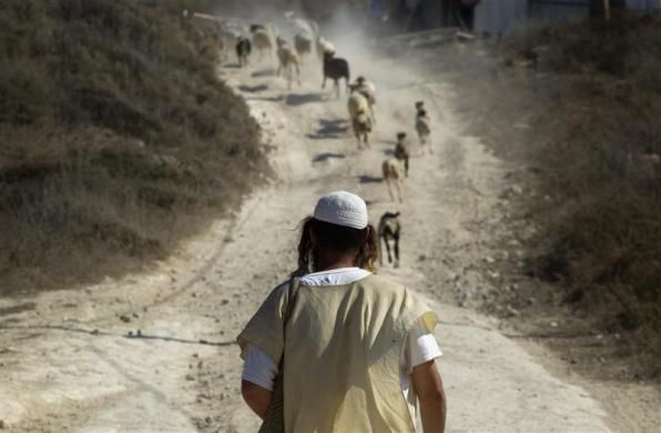 A Jewish herds sheep in the unauthorized outpost of Havat Gilad, south of the West Bank city of Nablus September 13, 2011.  REUTERS/ Ronen Zvulun