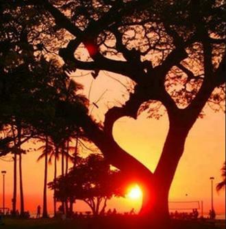 Un arbre amoureux