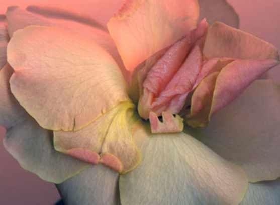 Les orchidées qui donnent des idées.. (6 photos)