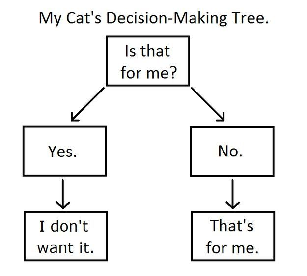 Cat Decision Tree