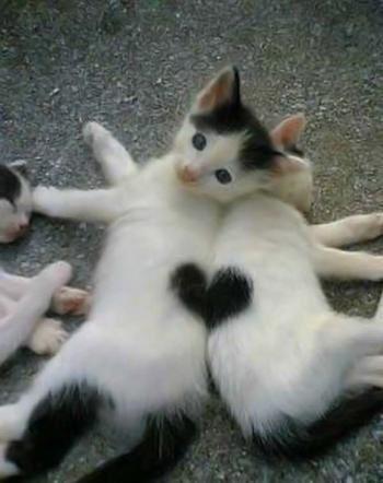 Coeur en partage