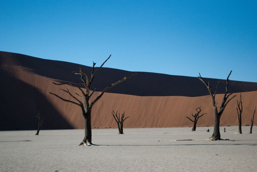 "10. ""The Dead Valley"". The trees look like sculptures on the surreal background. Dead Valley, Namibia. (Sara Narezo / National Geographic Traveler Photo Contest)"