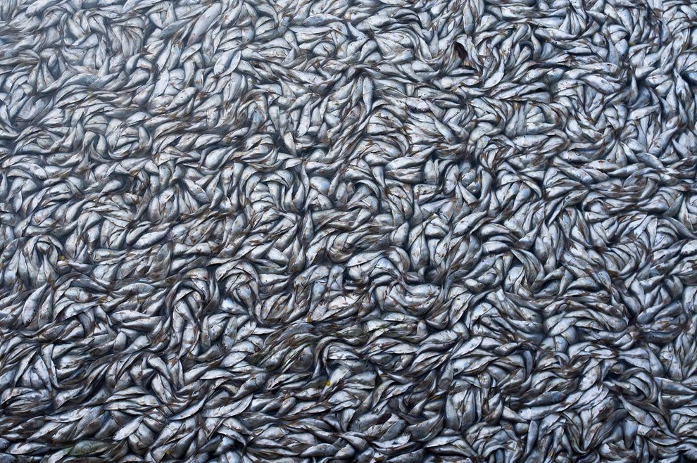 "4. ""Dead fish"". Mass death of fish in the lagoon Rodrigo de Freitas was due to a lack of oxygen in the water due to an oversight authorities. Rodrigo de Freitas Lagoon, Rio de Janeiro, Brazil. (Luis Gutman / National Geographic Traveler Photo Contest)"