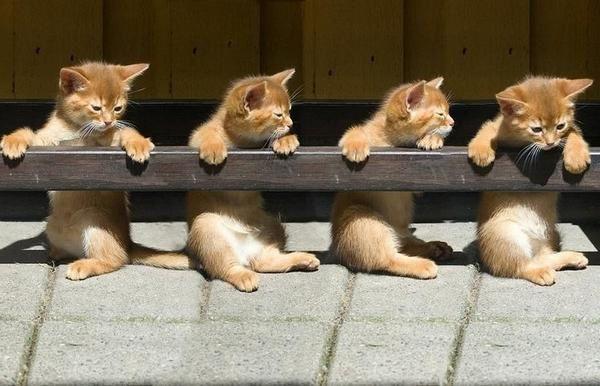 Les p'tits chats de l'opéra