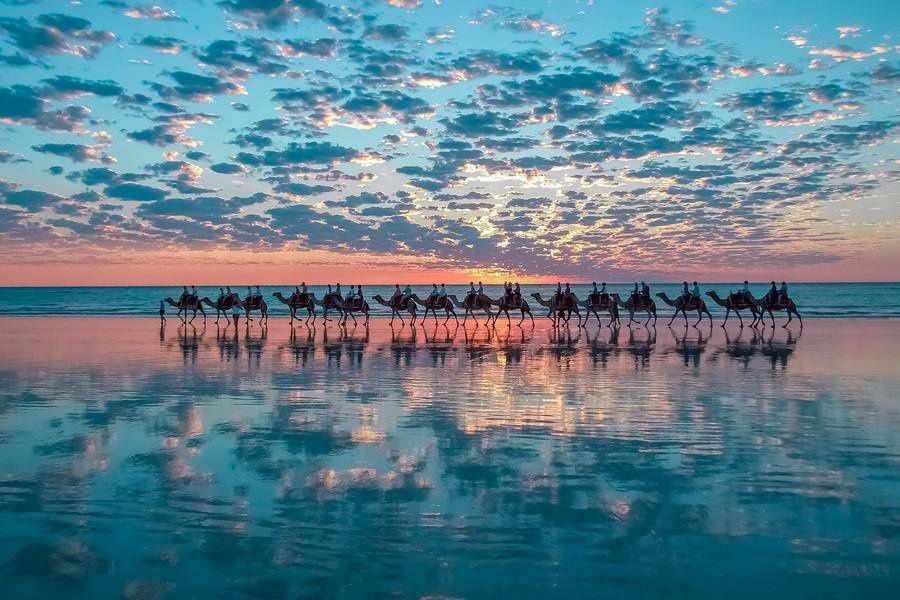 Chameaux à Broome en Australie (par Shahar Keren)