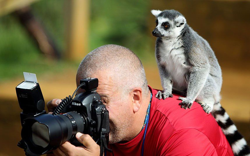Comment devenir photographe animalier