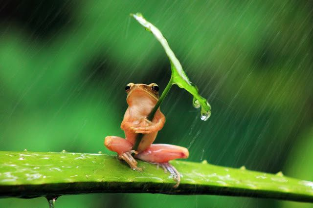 La rainette !