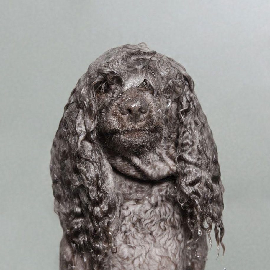 Wet Dog par Sophie Gamand : 13 photos