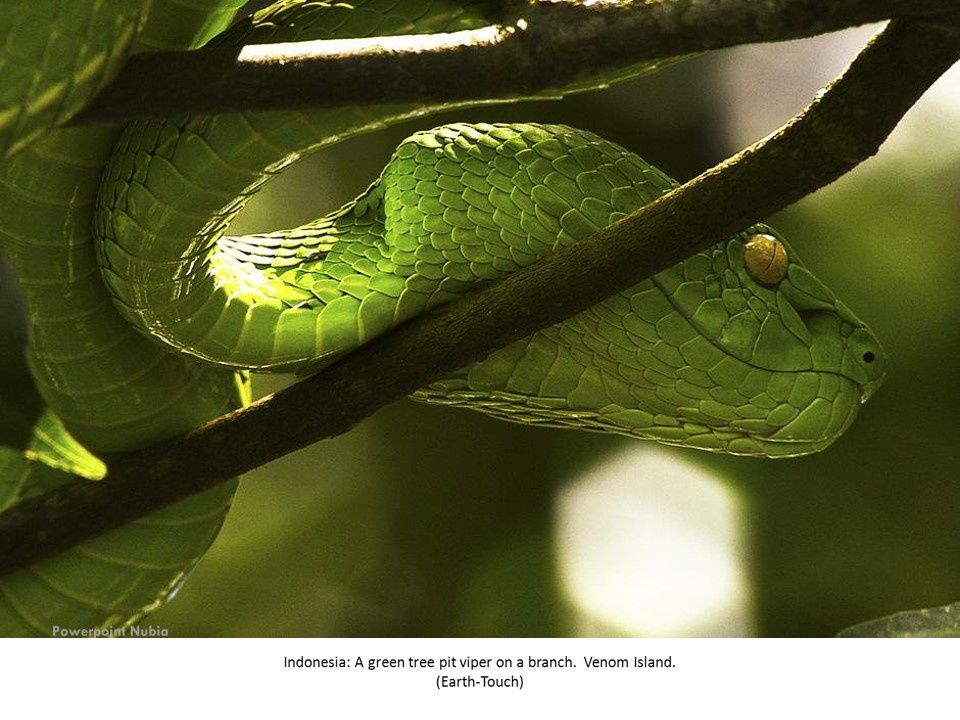 72 Photos : Best of National Geographic 2013 (1/5)