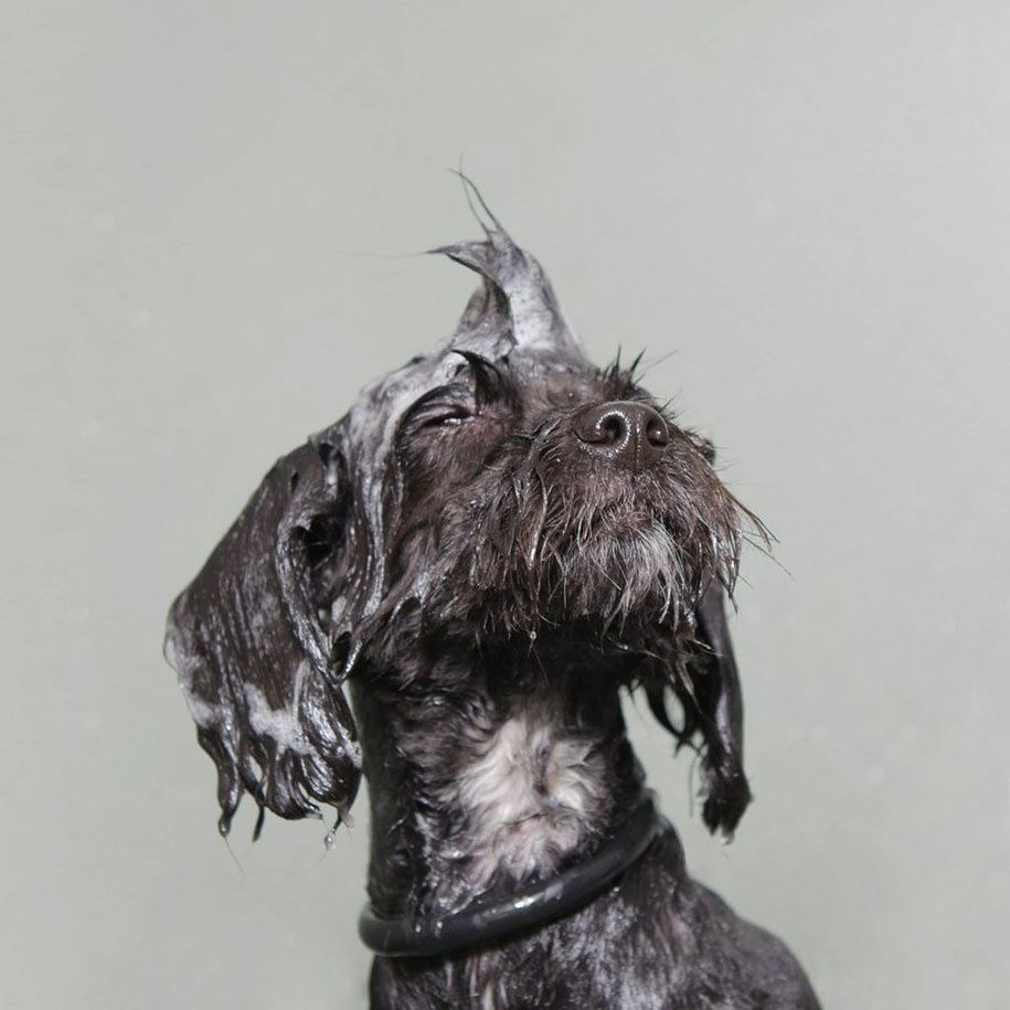 Wet Dog par Sophie Gamand : 13 photos