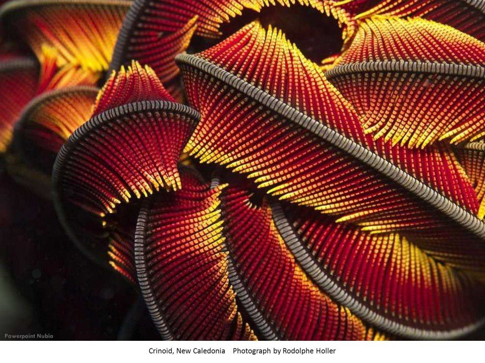 70 Photos : Best of National Geographic 2013 (3/5)