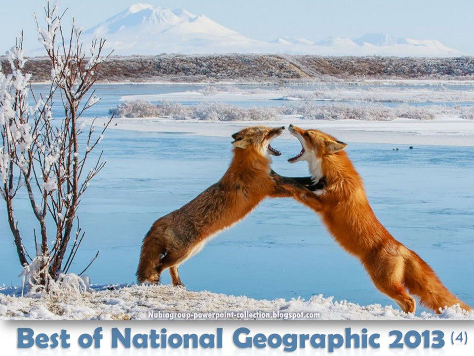 72 Photos : Best of National Geographic 2013 (2/5)