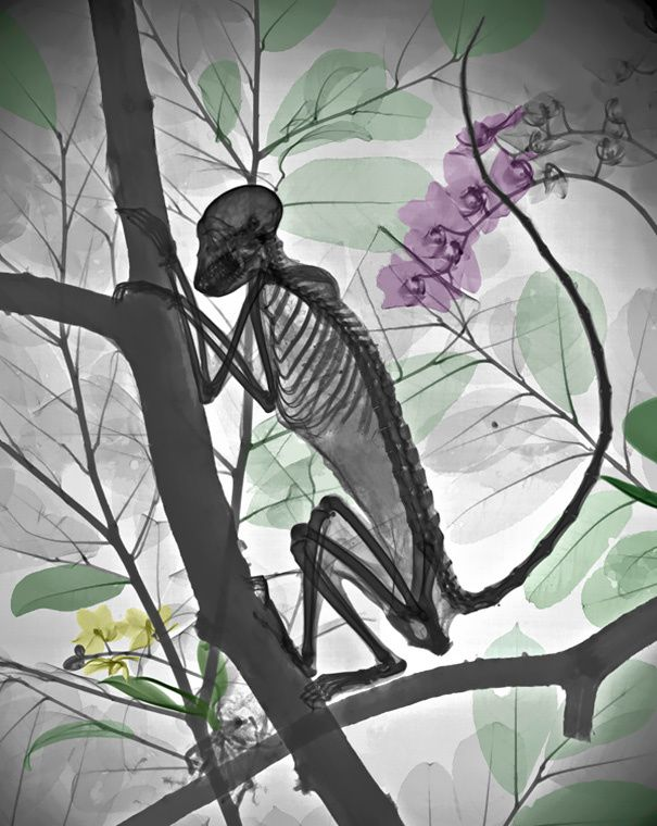 Nature From the Inside Out: Dreamy X-Ray Images Of Nature by Arie Van`t Riet