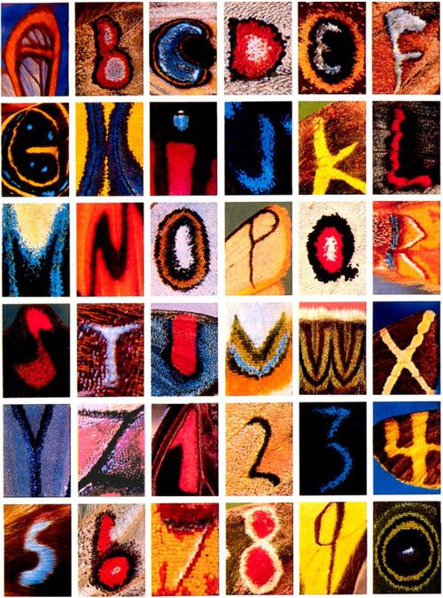 Alphabet, en ailes de papillons  pour gracieuses évocations.. (photo Kjell Bloch Sandved)