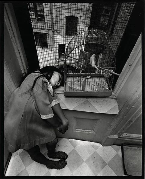 Cage en cage, East 100th Street, 1966-68 (Photo Bruce Davidson)