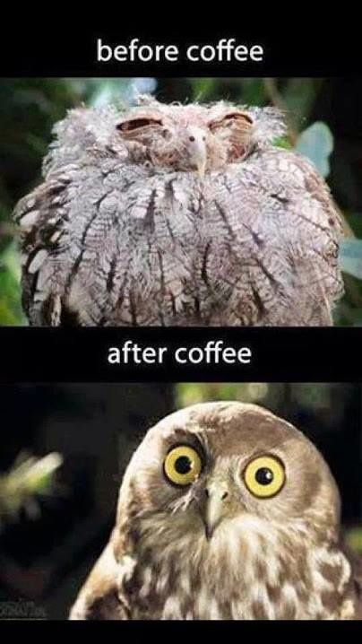 Before Café, After Café