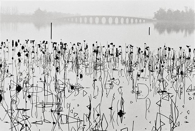 Wilted Lotus Blossoms, Beijing, China, 1964 (Photo René Burri)