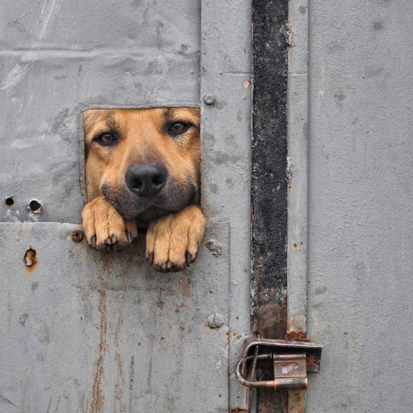 Vie de chien