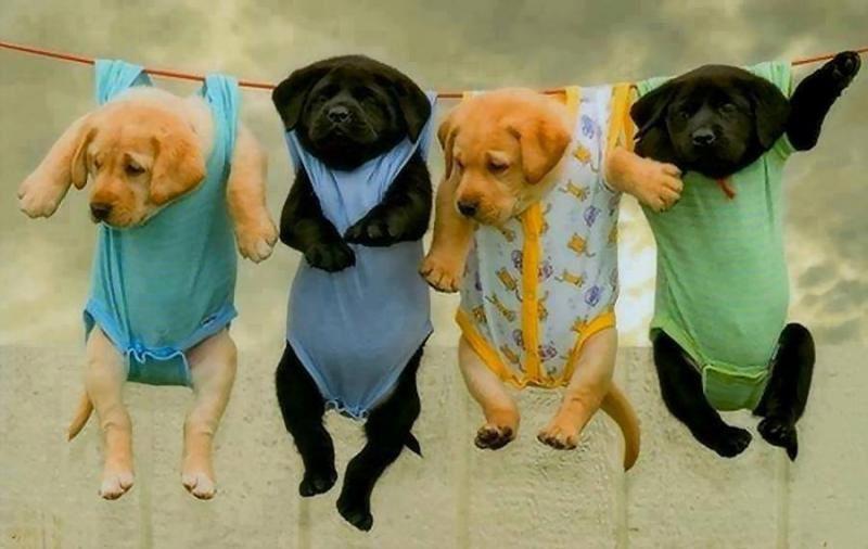 Etendre la lessive par un temps de chien !
