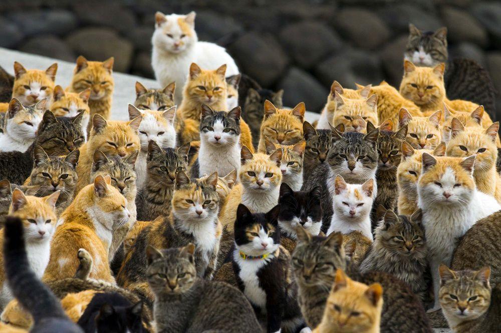 En images : Aoshima, « l'île aux chats » du Japon