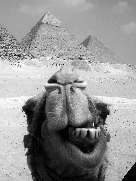 Selfie from egyptian pyramids