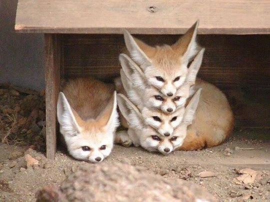 Onglets firefox