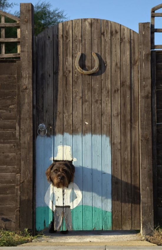 Doggy door