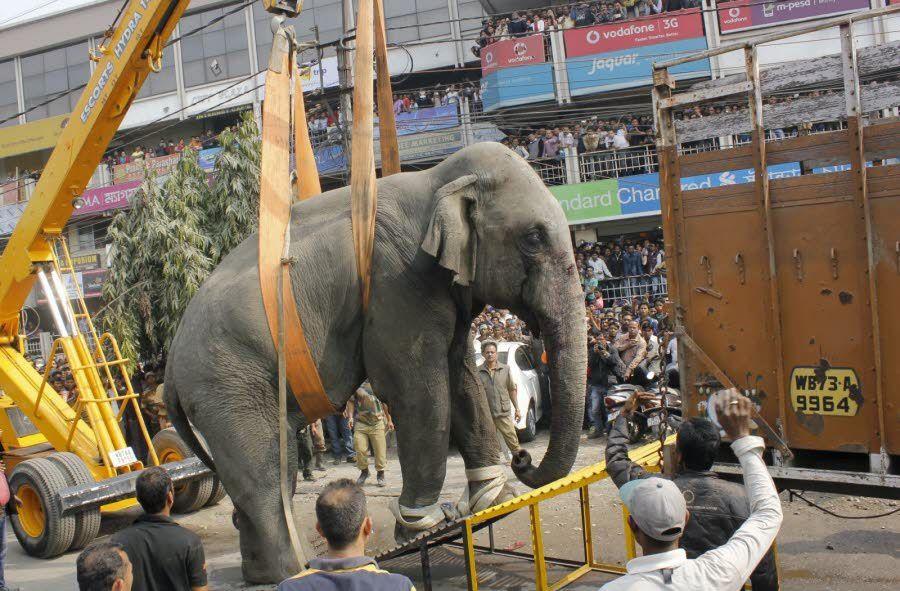 Un éléphant sème la panique dans une ville indienne