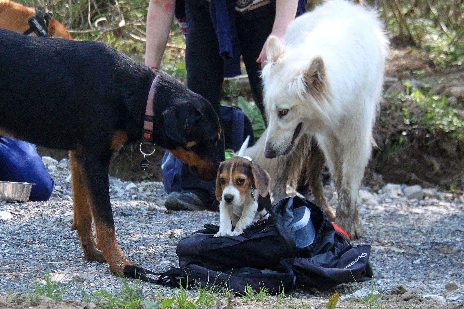 Photos - Promenades canines du 08 mai 2016