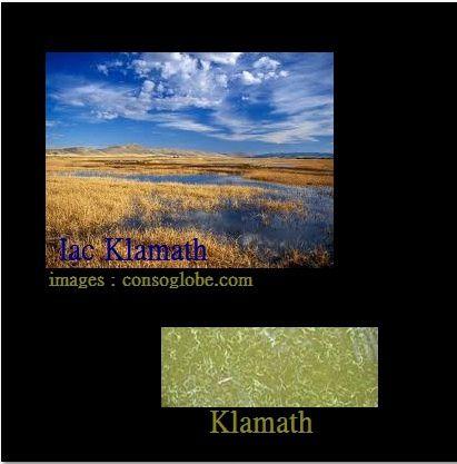 L'ALGUE KLAMATH