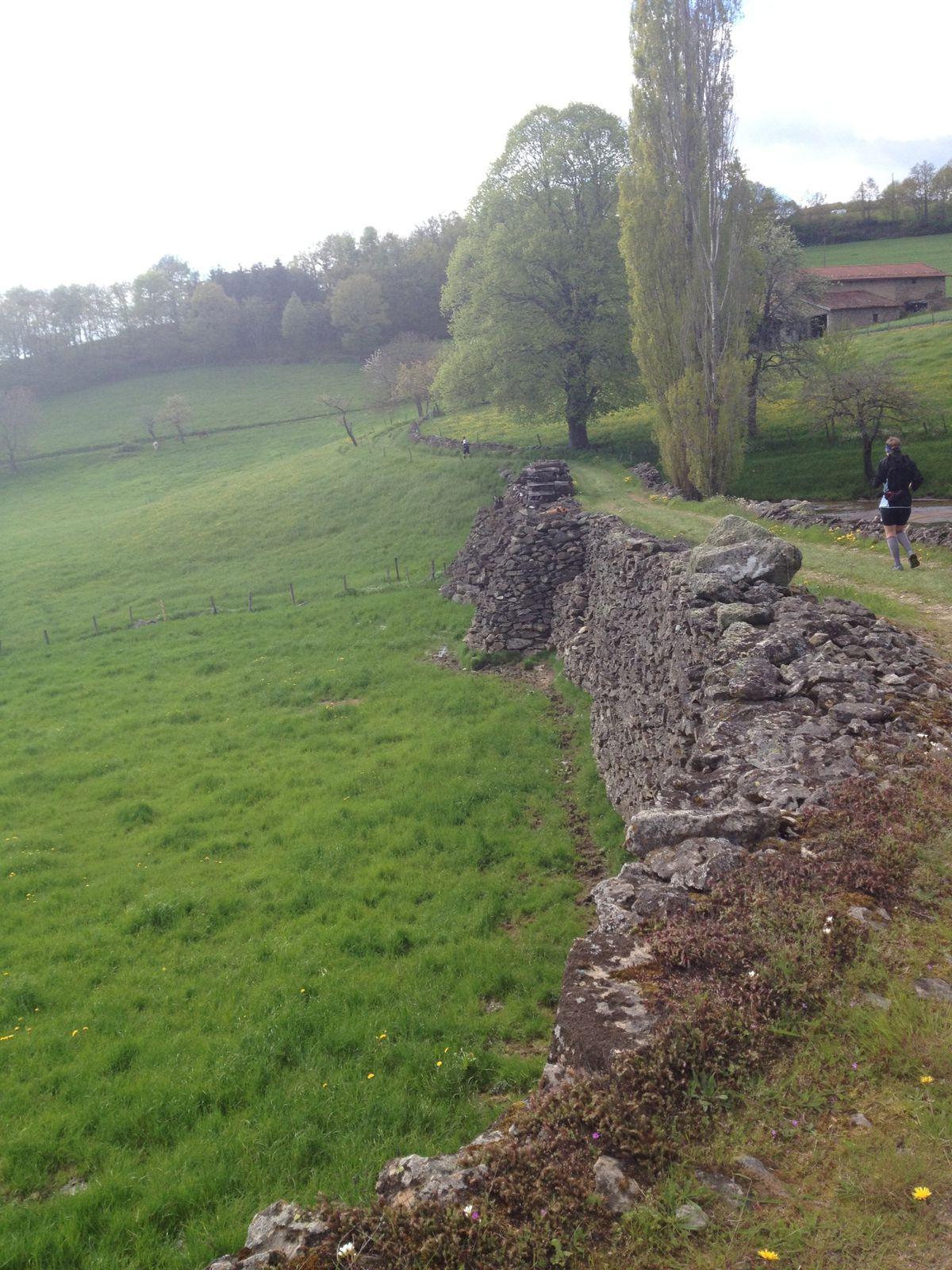 Trail des coursières des hauts du Lyonnais 2013