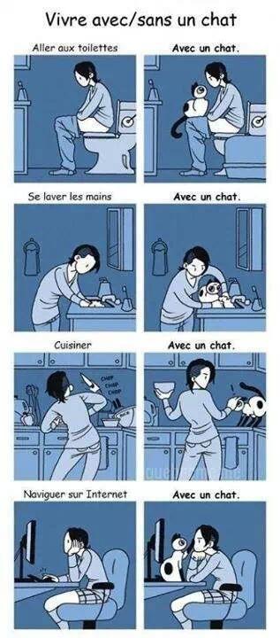 Vivre avec un chat!