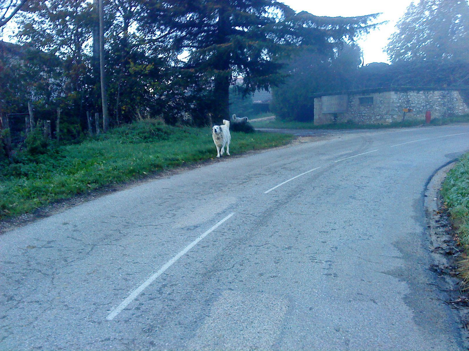 attention !! en haut de st andré,que se soit en vélo ou en courant,y à souvent ces 2 gros chiens qui sortent de la propriété.attention aux mollets !!!!
