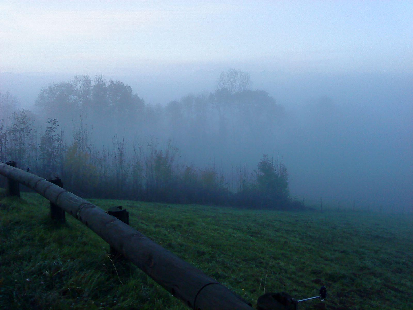 derrière les arbres,st andré en royant dans le brouillard