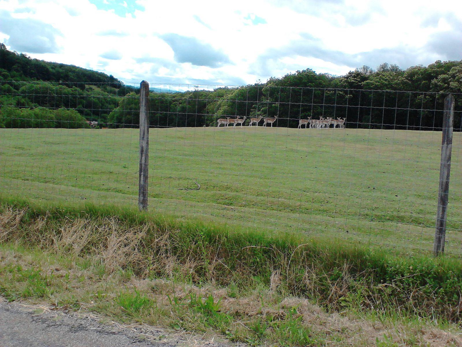 un champs de bambi !!