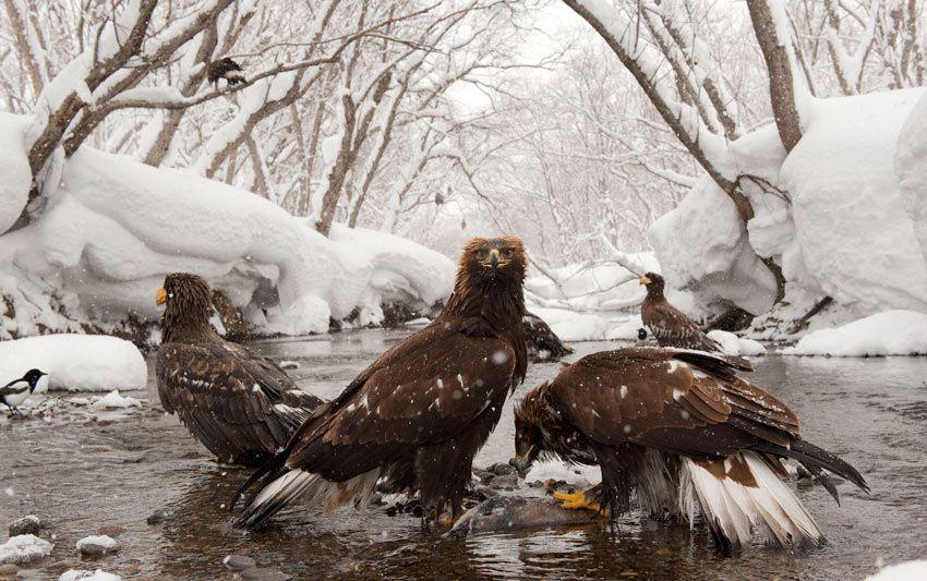 Les photographes du Lac Kourile. Alexey Bezrukov.
