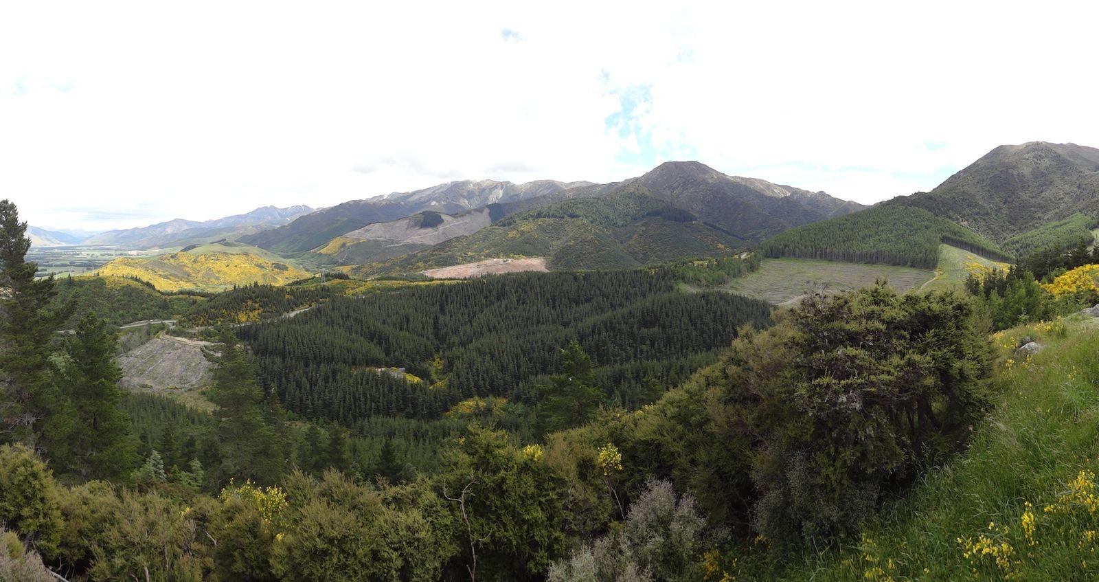 Forêt de sapins, pins et mélèzes