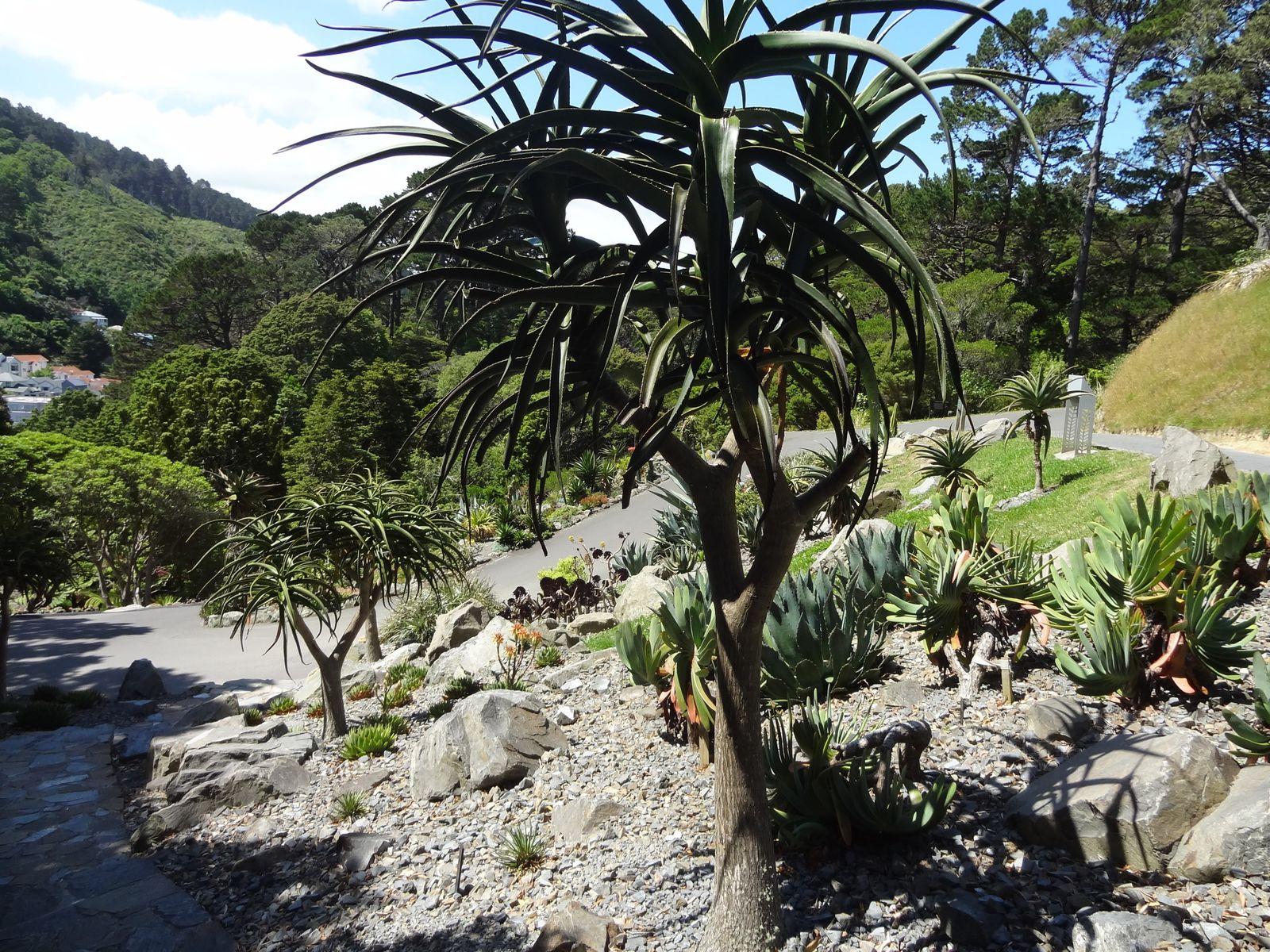 Le Botanic Garden où plusieurs espèces de plantes et de fleurs se côtoient.