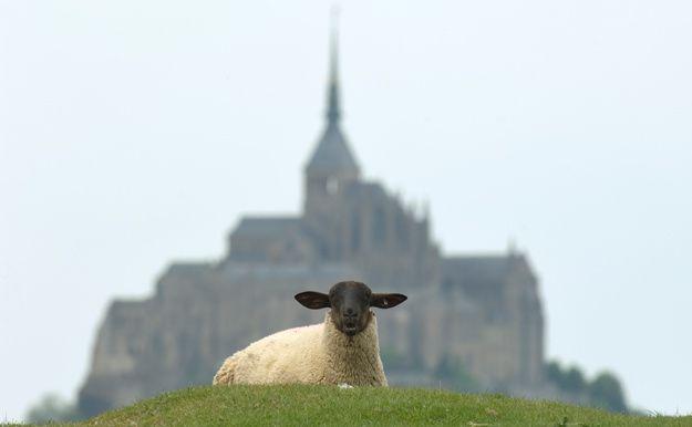 Mouton du Mont-Saint-Michel - Fimo