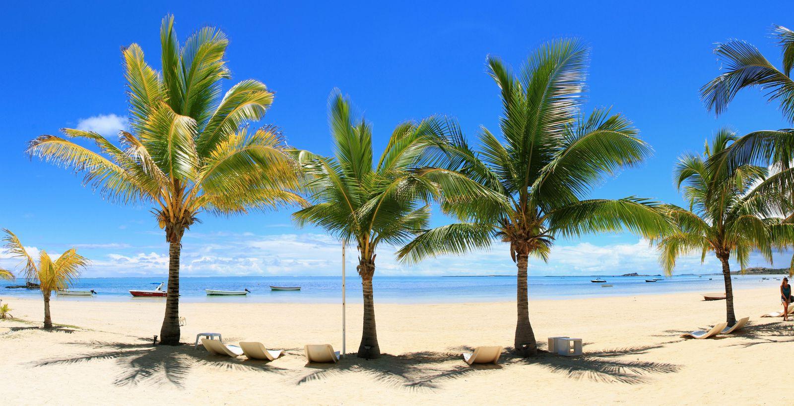 la plage de sable fin et ses cocotiers !