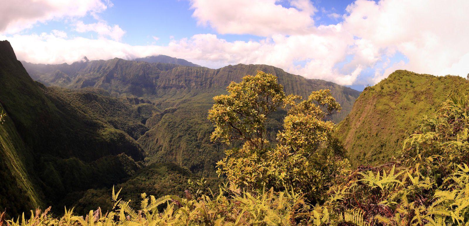 Vallée de la Punaaru