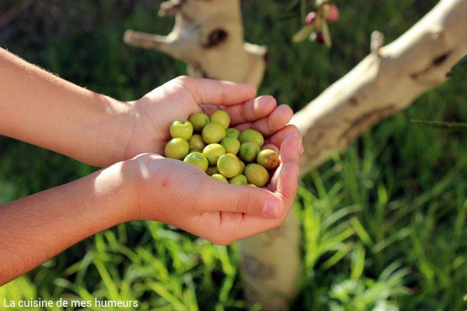 La préparation des olives vertes cassées du quartier sud