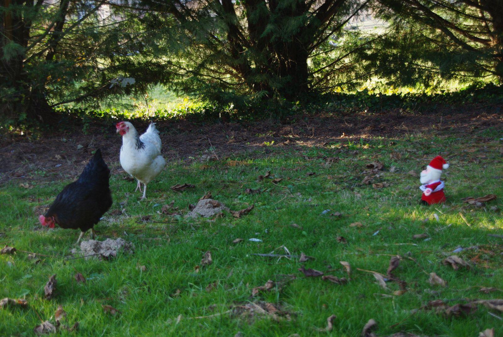 Hey! Attendez moi mes jolies poulettes!!!!!